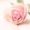 8001_1813045_avatar