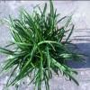 1001_231666566_avatar