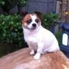 &碧海云天@,发布寻狗启示热爱宠物狗狗,希望流浪狗回家的狗主人。