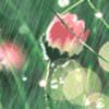 1001_1020943235_avatar