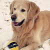潜水zha弹,发布寻狗启示热爱宠物狗狗,希望流浪狗回家的狗主人。