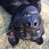 假大哥,发布寻狗启示热爱宠物狗狗,希望流浪狗回家的狗主人。