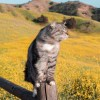灬猫想飞丶