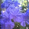 1001_84040855_avatar