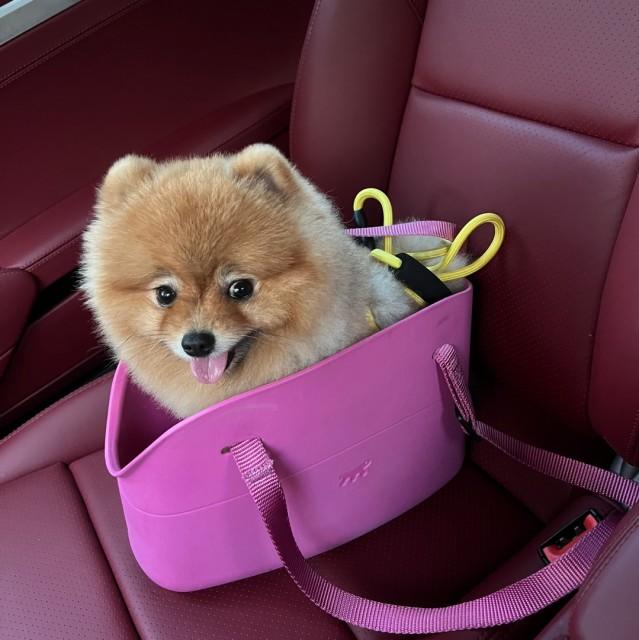 8001_539982_avatar