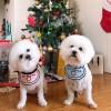 ◆·IcE,发布寻狗启示热爱宠物狗狗,希望流浪狗回家的狗主人。
