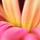 1001_543460349_avatar