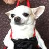 阿拉丁,发布寻狗启示热爱宠物狗狗,希望流浪狗回家的狗主人。