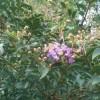 1001_1230238898_avatar