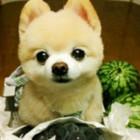 ☆Sea-dog☆