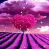 1001_81036342_avatar