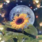 星空下的冷月