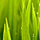 1001_1022190117_avatar