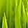 1001_153677507_avatar