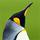 1001_164705578_avatar