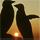 1001_749668858_avatar