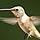 1001_1195484156_avatar