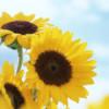 1001_22643736_avatar