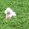 流量在线,发布寻狗启示热爱宠物狗狗,希望流浪狗回家的狗主人。