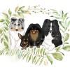 虎虎麻,发布寻狗启示热爱宠物狗狗,希望流浪狗回家的狗主人。
