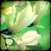 一花一叶落