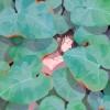 蓝棠宇的头像