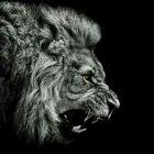 狮子座的男人